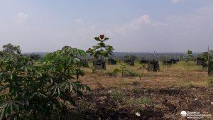Gambar 6 Lokasi penelitian penanaman kembali lahan bekas tambang menggunakan jambu merah